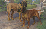 English Mastiffs Framed Prints - Ngm194112_798_up, Framed Print by National Geographic