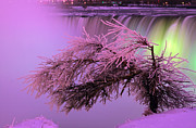 Festival Of Light Framed Prints - Niagara Falls Festival Lighting Framed Print by Charline Xia