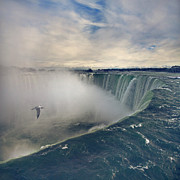 Flying Seagull Posters - Niagara Falls Poster by Istvan Kadar Photography
