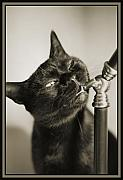 Cats Metal Prints - Nibbles Metal Print by Crystal Rolfe