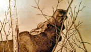 Cow Pyrography Posters - Nibbling the Willow Poster by Adam Owen