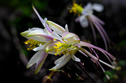 State Flowers Photos - Nice Flowers by Jacek Joniec