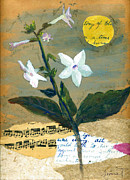 Evening Flower Originals - Nicotiana by Sorana Tarmu
