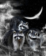 Raccoons Framed Prints - Night Bandits Framed Print by Carol Cavalaris