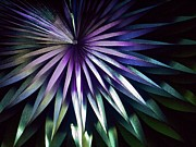 Geometric Photo Prints - Night Bloom Print by Photo ephemera
