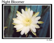 Bloomer Prints - Night Bloomer Posters Print by Heather Kirk
