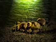 Geese Digital Art Posters - Night Feed Poster by Garry Staranchuk