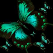 Moth-butterflies Digital Art - Night Flight by Garry Staranchuk