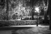 Vichy Framed Prints - Night light in the park Framed Print by Alexander Davydov