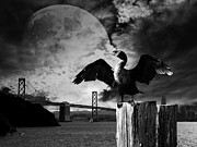 Oakland Bay Bridge Posters - Night of The Cormorant . Black and White Poster by Wingsdomain Art and Photography