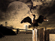 Oakland Bay Bridge Posters - Night Of The Cormorant Poster by Wingsdomain Art and Photography