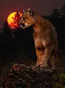 Mountain Lion Framed Prints - Night of the Cougar Framed Print by Wade Aiken