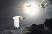 Night Of The White Egrets Print by Wingsdomain Art and Photography
