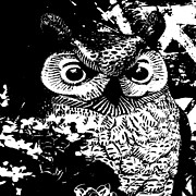 Nature Art - Night Owl by Daryl Macintyre
