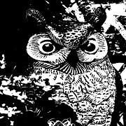Daryl Macintyre - Night Owl