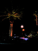 J R Baldini M Photog - Night Palm