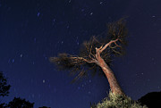 Single Tree Prints - Night Photography With Traces Of Circumpolar Print by Creative Images