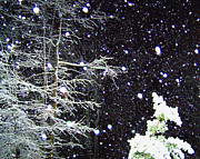 Night Snow Print by Sandi OReilly