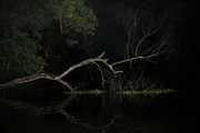Lumbering Art - Night Tree by Jack Norton