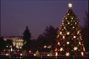 Religious Celebrations Prints - Night View Of The Lighted Tree In Front Print by Kenneth Garrett