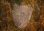 Spider Web Art - Night Weaver by Carol Groenen
