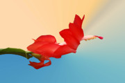 Christmas Cactus Art - No Fear of Flying by Kristin Elmquist
