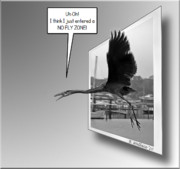 Great Blue Heron Black And White Posters - No Fly Zone Poster by Brian Wallace
