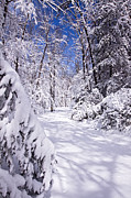 Snowshoe Posters - No Footprints Poster by Rob Travis