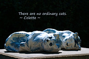 Colette Framed Prints - No Ordinary Cats Framed Print by Dagmar Ceki