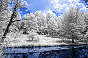 Nobob Pond Ir Print by Amber Flowers