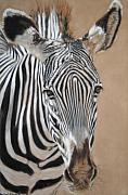 Africa Pastels Framed Prints - Nomad  Framed Print by Carol McCarty