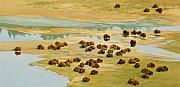Yellowstone Paintings - Nomads by Thomas Sorrell