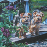 Norfolk; Painting Prints - Norfolk Terrier Pair Print by Lee Ann Shepard