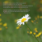 Daisy Flower... Poems About Daisy Flowers