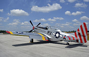 North American Aviation Photos - North American F-51d Mustang by Stocktrek Images