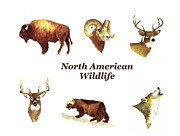 North American Wildlife Painting Posters - North American Wildlife Poster by Michael Vigliotti