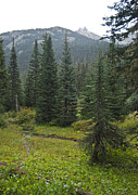 Cascades Prints - North Cascade Back Country 9166 Print by Michael Peychich