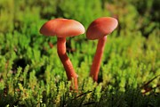 Fungus Photos - North Cascades Mushrooms by Benjamin Yeager