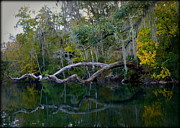 Peaceful Art - North Florida River Reflections by Carla Parris
