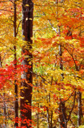 Autumn Tree Color Art - North Georgia Autumn Leaves by Bruce Gourley
