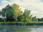 Landscape Drawings - North of the Grade-Great Egret by Bruce Morrison