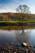 Bolton Abbey Posters - North Yorkshire morning Poster by Neil Buchan-Grant