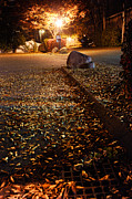 Streetlight Posters - Northamptons autumn leaves at night Poster by HD Connelly
