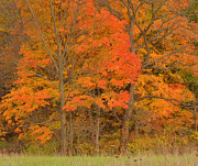 Vivid Colors Metal Prints - Northeast Fall Colors Metal Print by Stephen  Vecchiotti