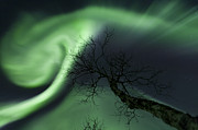 Bare Trees Posters - Northern Lights In The Arctic Poster by Arild Heitmann