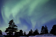 Polar Climate Prints - Northern Lights Over Trees Print by Richard McManus