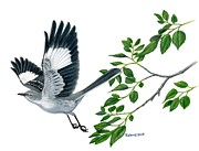 Kalen Malueg Drawings Posters - Northern Mockingbird  Poster by Kalen Malueg