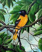 Black Art Paintings - Northern Oriole by David G Paul
