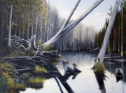 Dinny Madill - Northern Wetlands