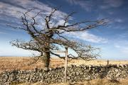 Northumberland, England A Leafless Tree Print by John Short